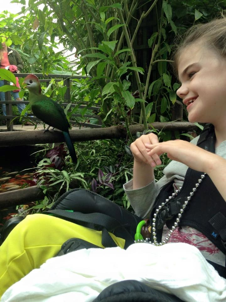 Young girl in a wheelchair smiling and looking at a tropical bird